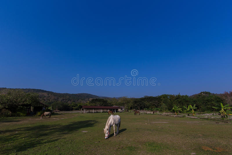 Horses in the field. Horses eating gress in the field stock photo