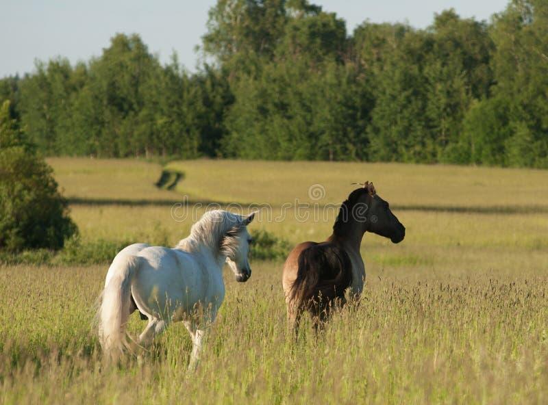Horses on freedom stock image