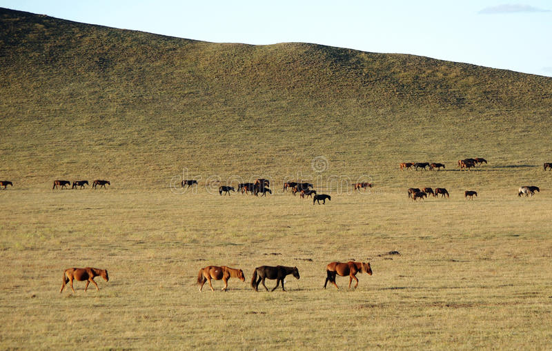 Horses on golden grassland in Autumn