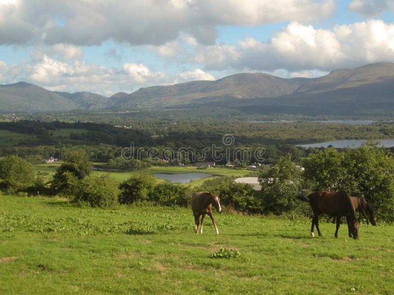 Download Horses, Grass And Lakes In Killarney, Ireland Stock Image - Image: 16138413