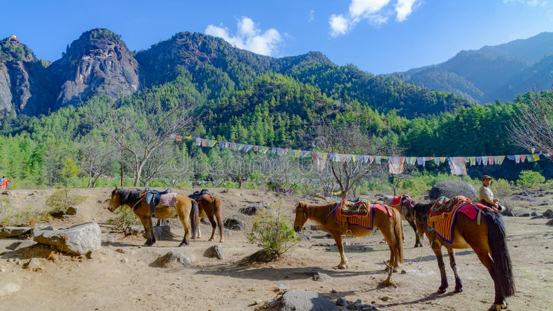 Horses and grass landscape with the green mountains,Bhutan stock photos