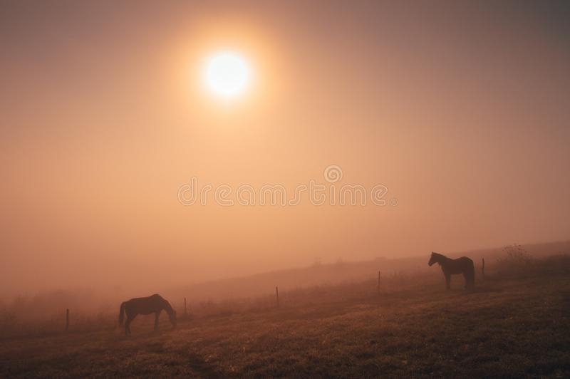 Horses grassing together in autumn summer morning, calm, nostalgic mood, edit space royalty free stock images