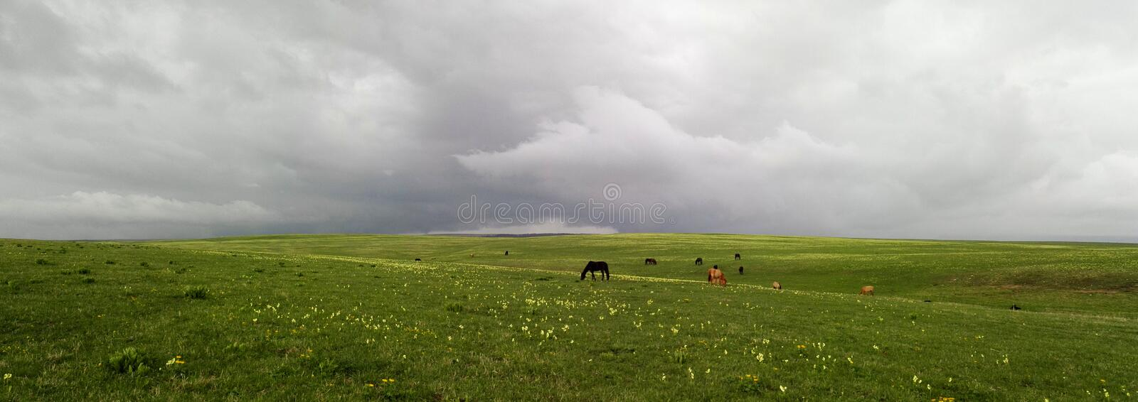 Horses graze in a meadow on a cloudy day royalty free stock photography