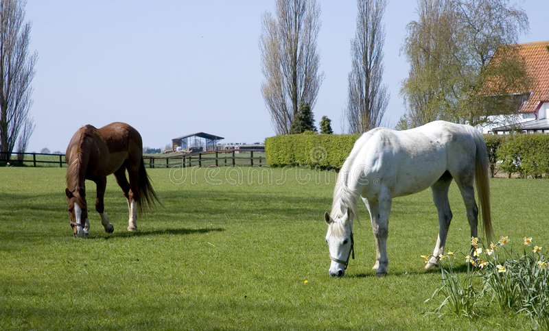 Download Horses grazing stock image. Image of tree, quiet, natural - 113371