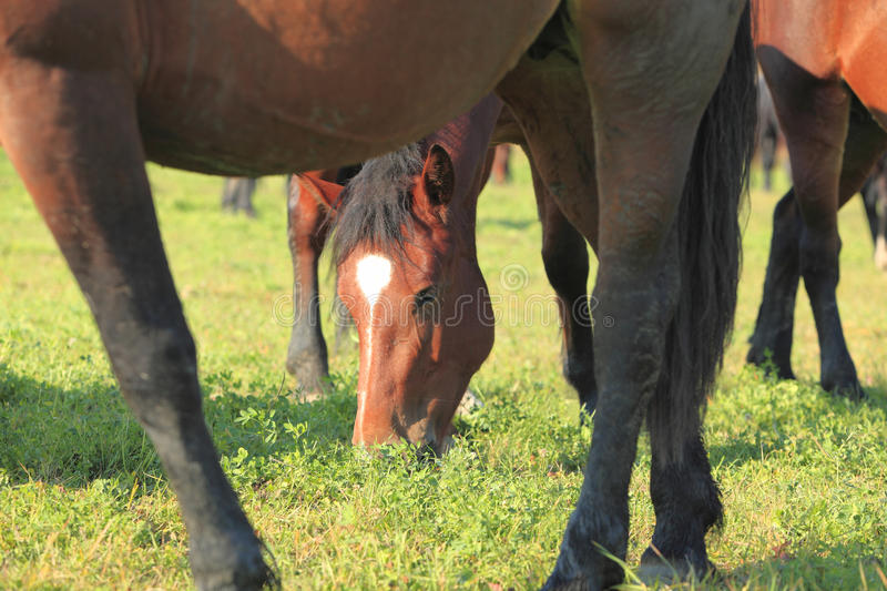 Download Horses grazing stock image. Image of group, pasture, outdoors - 11543871