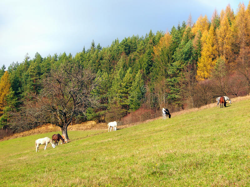 Download Horses Grazing In Autumn Field Stock Image - Image: 36882701