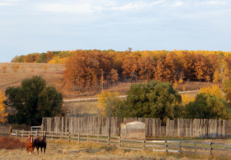 Horses Grazing in the Valley in Fall. Two horses enjoying the last warm days of fall in the hills near Lavenham, Manitoba. Autumn colors beyond a tired old stock image