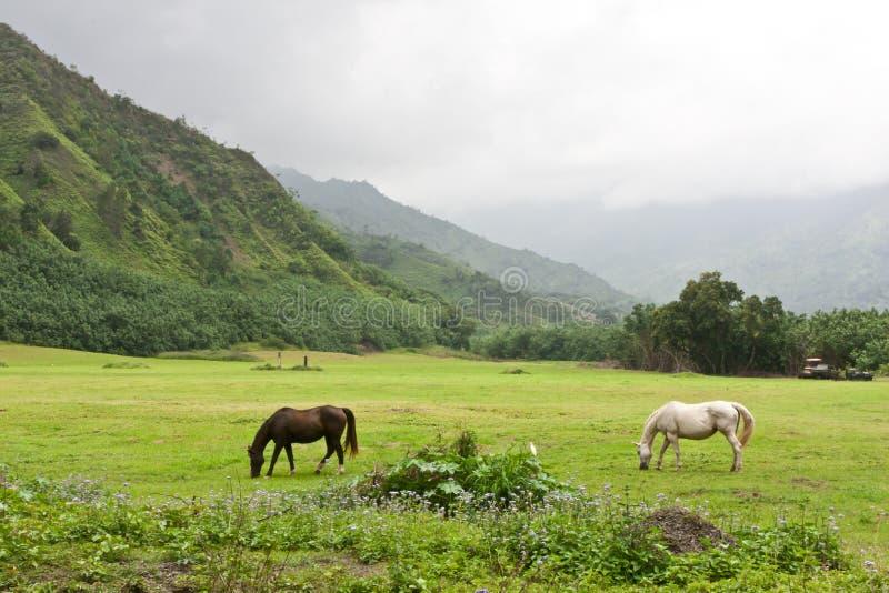 Horses Grazing In Lush Pasture stock photo