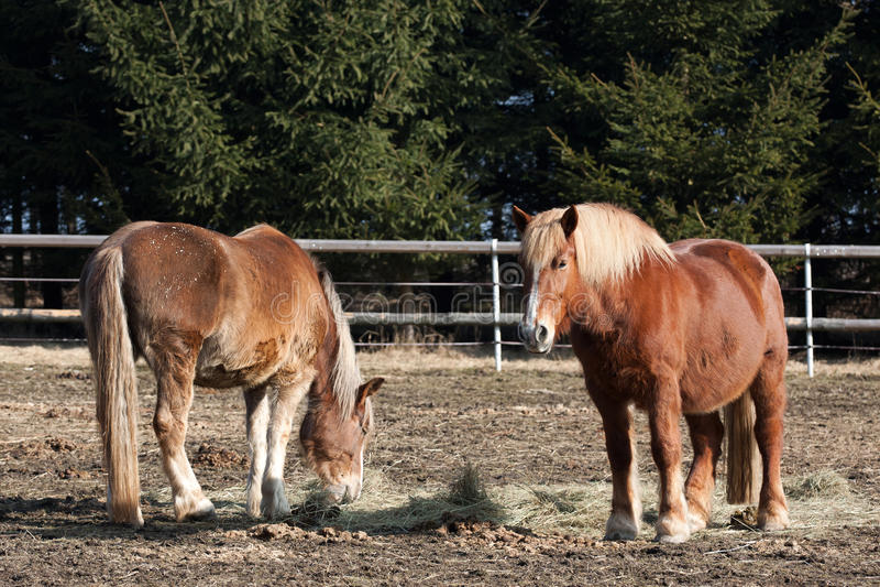 Download Horses stock photo. Image of graze, black, beautiful - 29791978