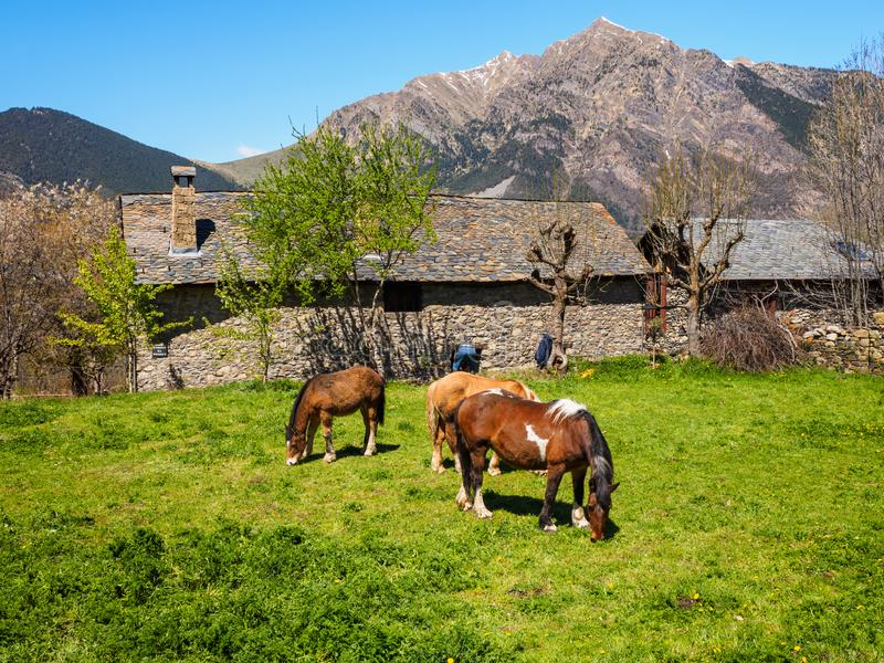 Horses grazing in an old, Roman stable, in Taüll, Catalonia, Spain royalty free stock photography