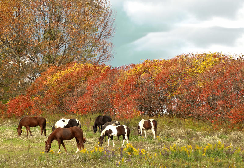 Download Horses grazing scene stock image. Image of grazing, horse - 27132411