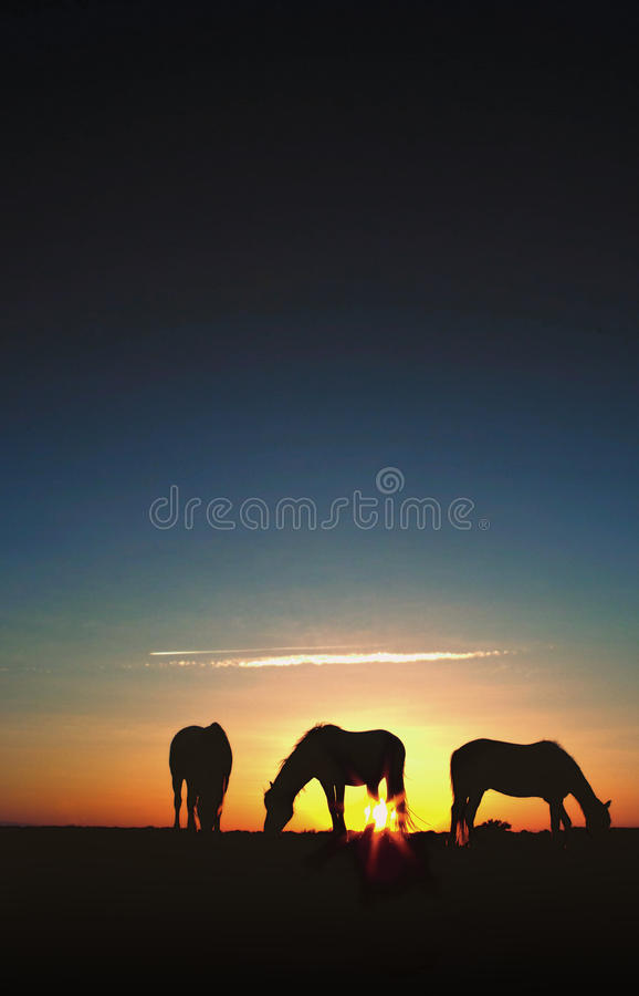 Horses Grazing At Sunrise Silhouette Royalty Free Stock Images