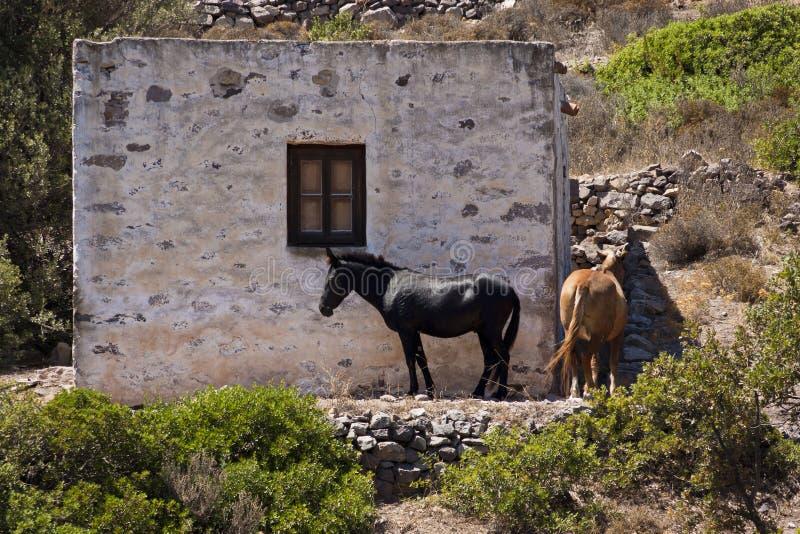 Download Horses in Greek province stock image. Image of landscape - 16547057