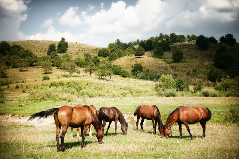 Download Horses on green rural land stock photo. Image of country - 21919592