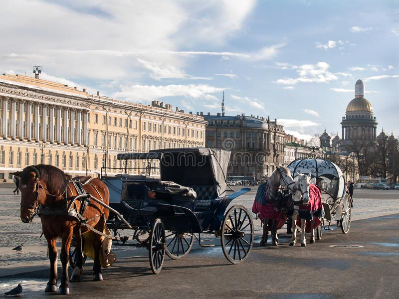 Horses harnessed to a carriage and a cabriolet on the Palace Square in St. Petersburg. A coach and a cabriolet with horses harnessed in them stand on the Palace stock photography