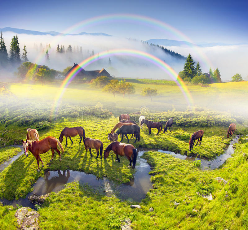 Horses have crooked creek. Background beautiful brook, like a snake grazing beautiful semi-wild cats, like mustangs. In summer the mountain people send them to royalty free stock photography
