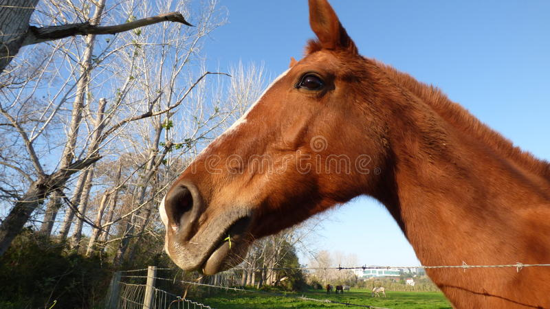 Download The horses head stock photo. Image of grass, field, weed - 64134658
