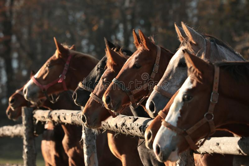 Horses head in the pasture stock photos