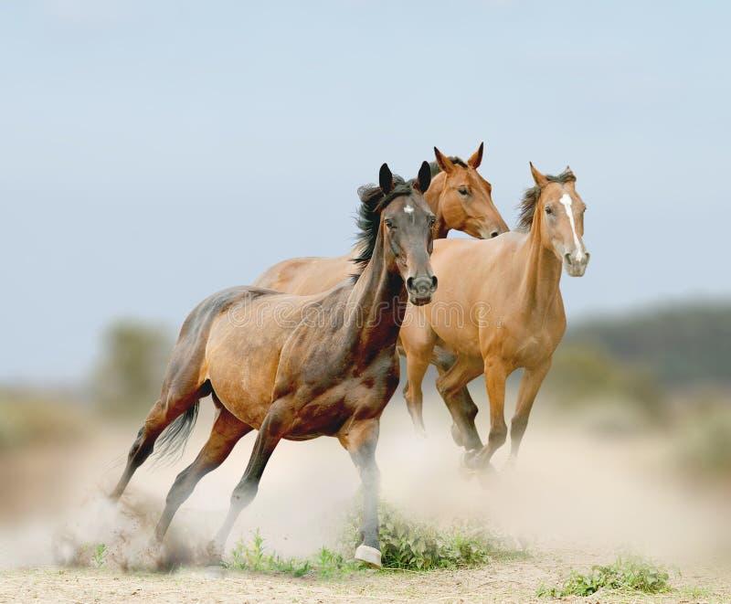Horses herd stock image