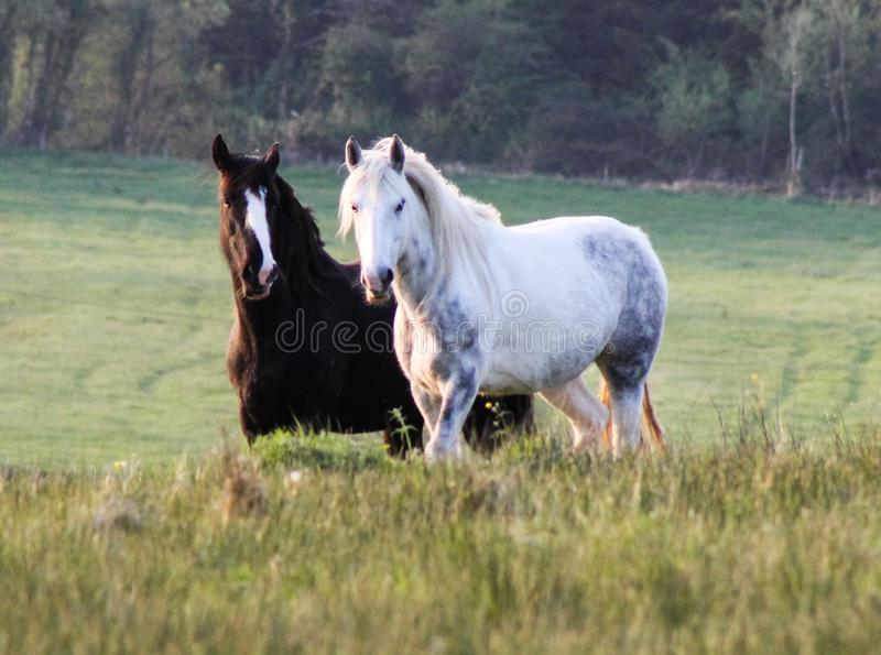 Horses on the hill royalty free stock photography