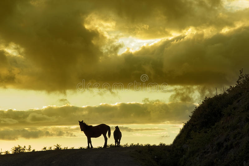 Horses on the horizon stock images