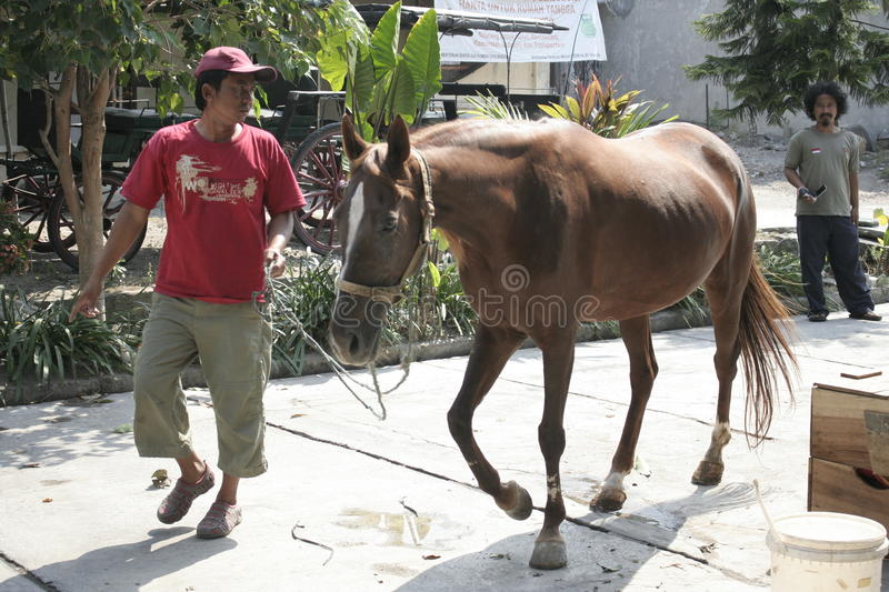 Horses and horse handler In Solo. Man named Mas No. brought horses to transport the carriage belongs to the President, Joko Widodo stock photo