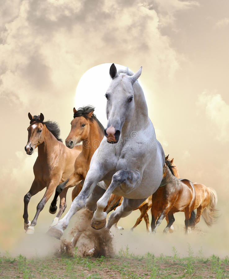 Free Horses In Sunset Stock Photo - 25760910