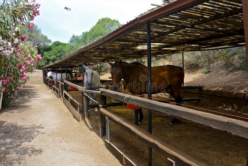 Horses inside paddocks with wicker canopy royalty free stock photos