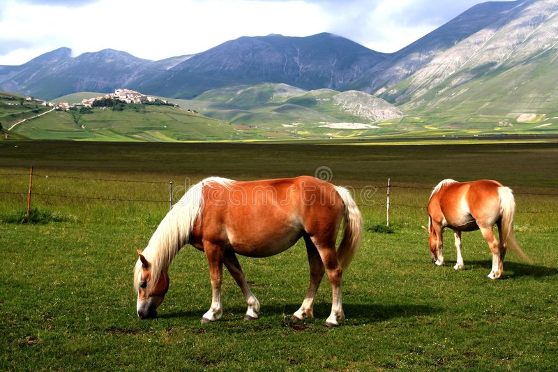 Horses With Landscape Stock Image