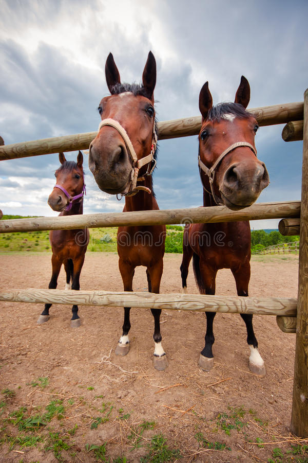 Free Horses Look Out Of The Aviary. Stock Image - 66097741