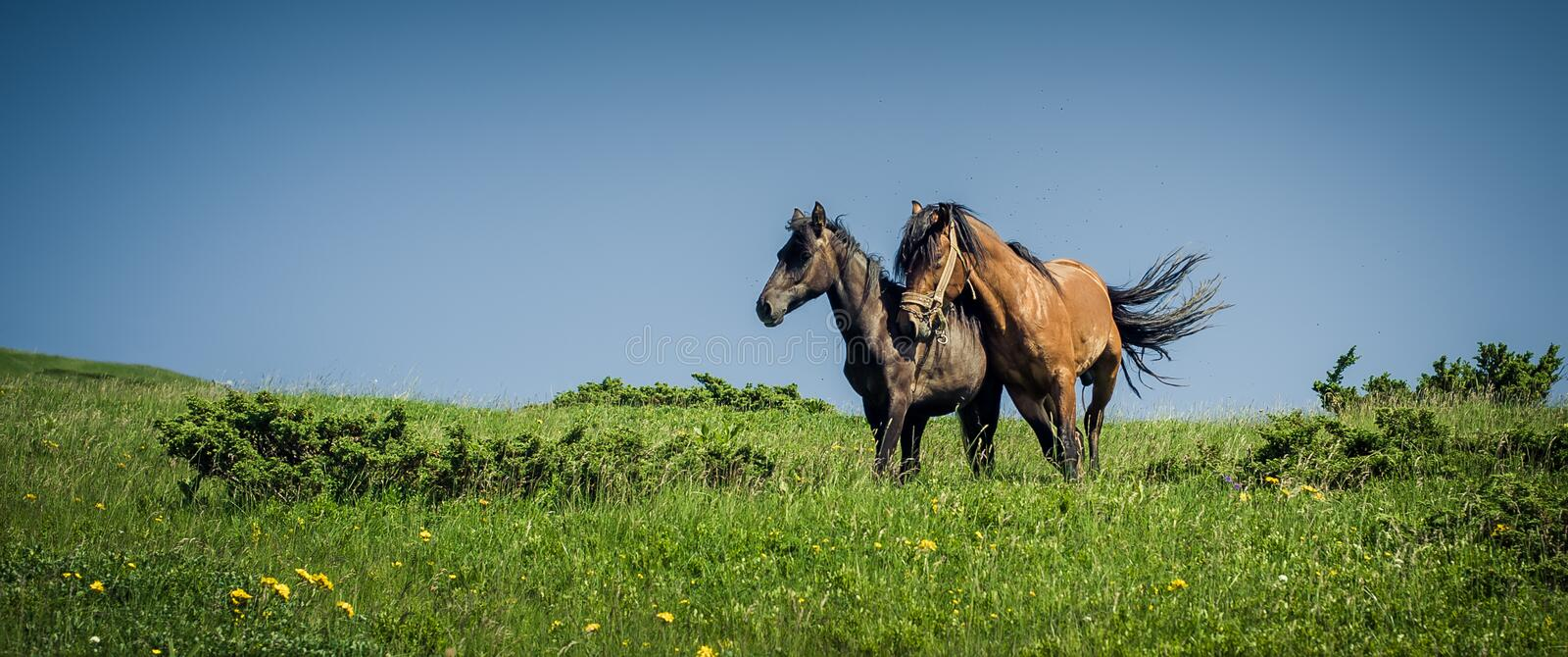 Horses in love. Two horse portrait on mountain environment. Beautiful nature background stock photo