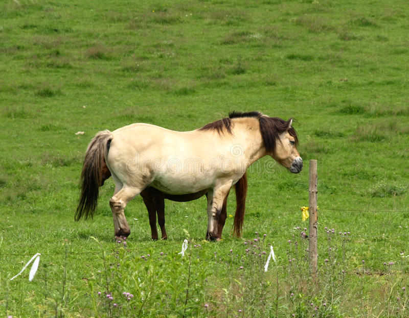 Download Horses in a meadow stock photo. Image of travel, sport - 13449152