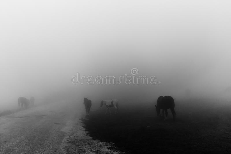 Horses in the middle of fog near a country road on Mt. Subasio stock image