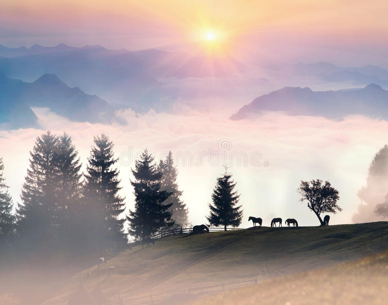 Horses in the mist royalty free stock image