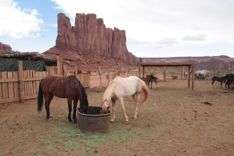 Horses in Monument Valley navajo tribal park, Arizona. In Monument Valley, navajos offer guided horse trips to tourists royalty free stock image