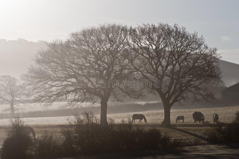 Horses in morning mist stock photo
