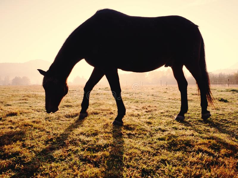 Horses in the morning mist on the pasture in October stock photos