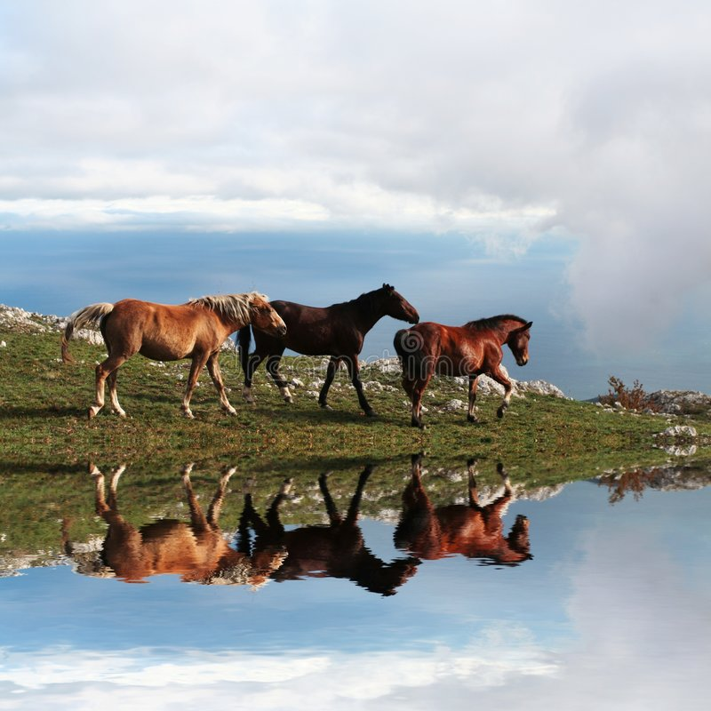 Horses in mountain stock photography