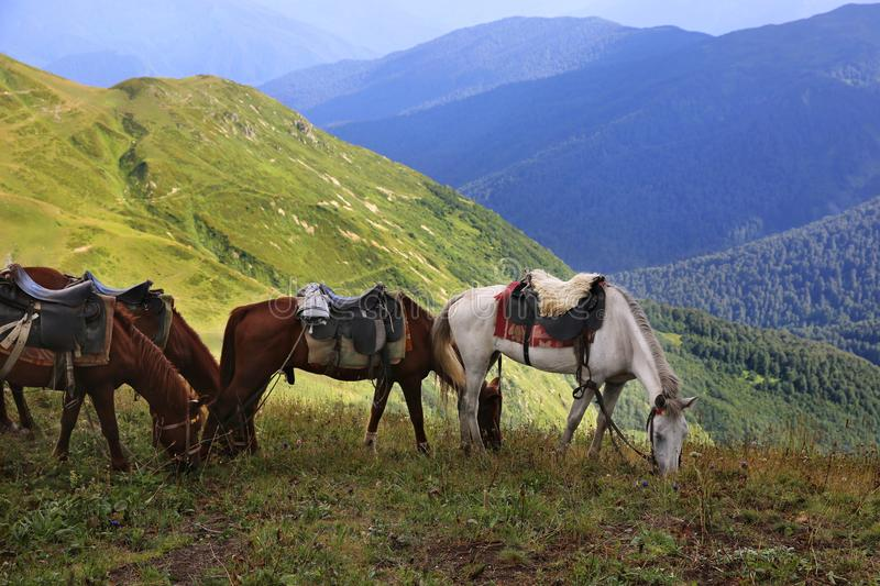 Horses in the mountain pasture of Abkhazia royalty free stock images