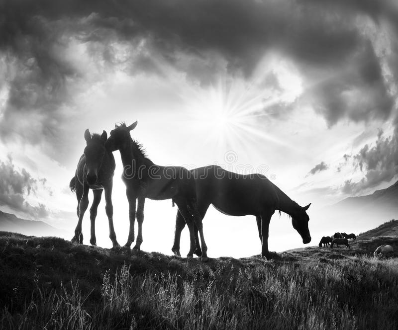 Horses on the mountain top stock image