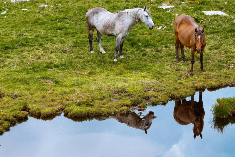 Download Horses in mountains stock image. Image of male, freedoom - 10851801