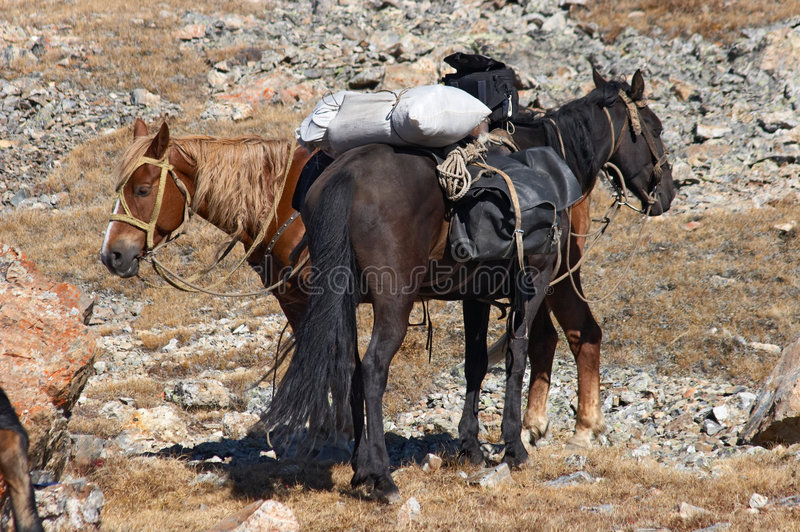 Horses and mountains. stock images