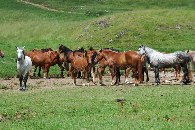 Horses on moutain glade stock photo