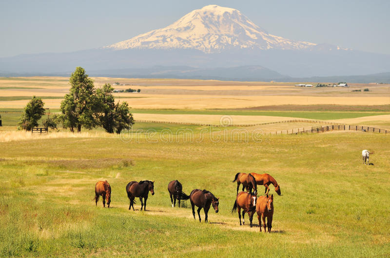 Download Horses And Mt. Adams Stock Photos - Image: 23454013