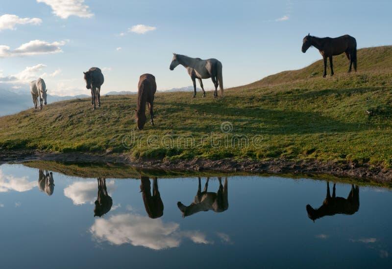Horses Near The Lake Royalty Free Stock Photo