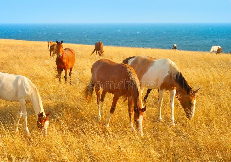 Horses near the sea stock photo