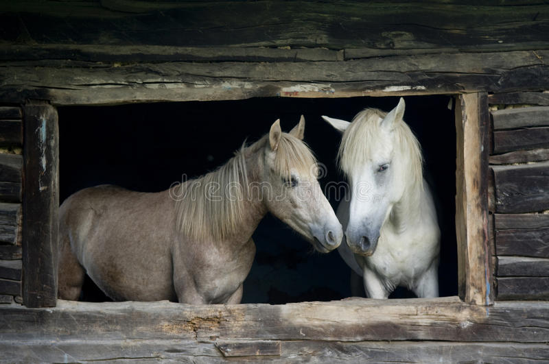 Horses in the old house