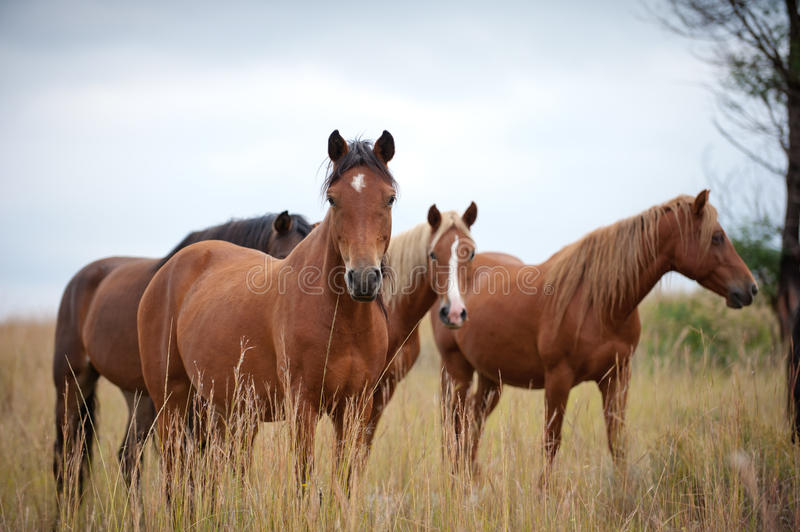 Download Horses stock image. Image of wild, looking, equine, mare - 29846021