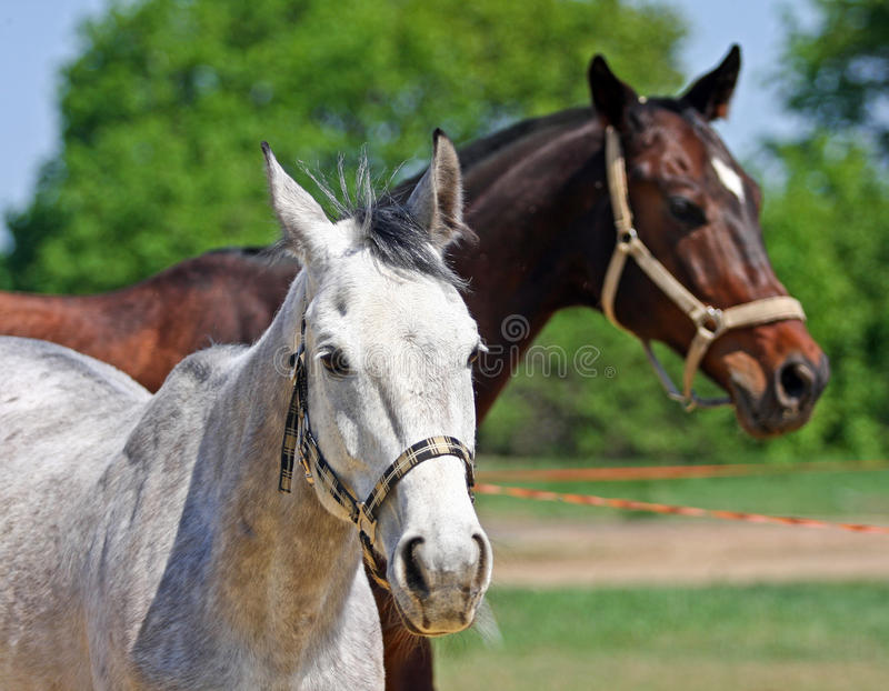 Download Horses in the paddock stock photo. Image of country, paddock - 25304058