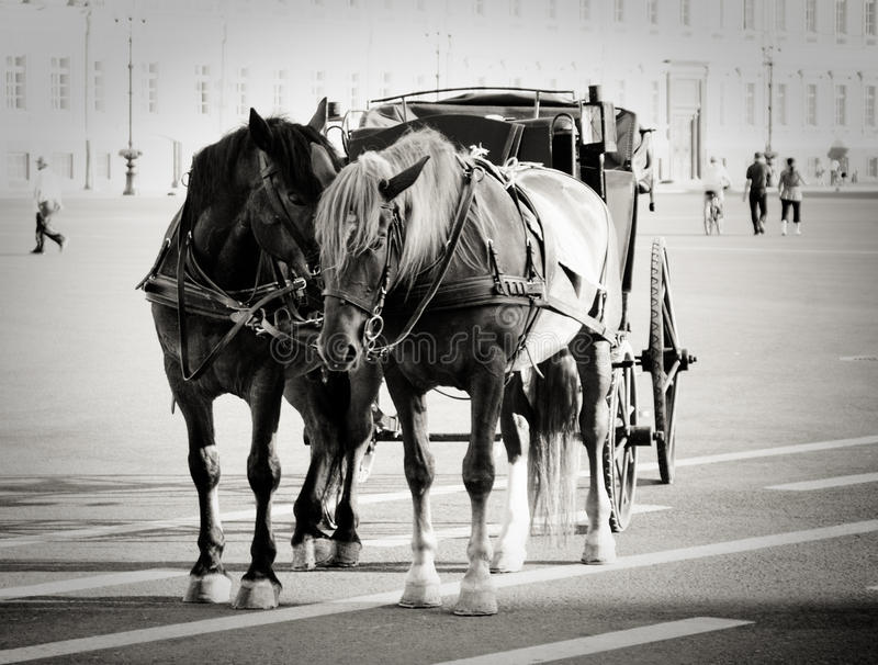 Download Horses On The Palace Square Stock Photo - Image: 16703082
